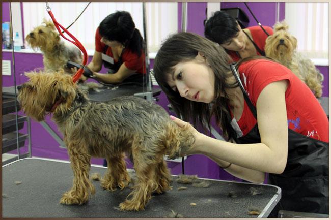 Как называется стрижка собак