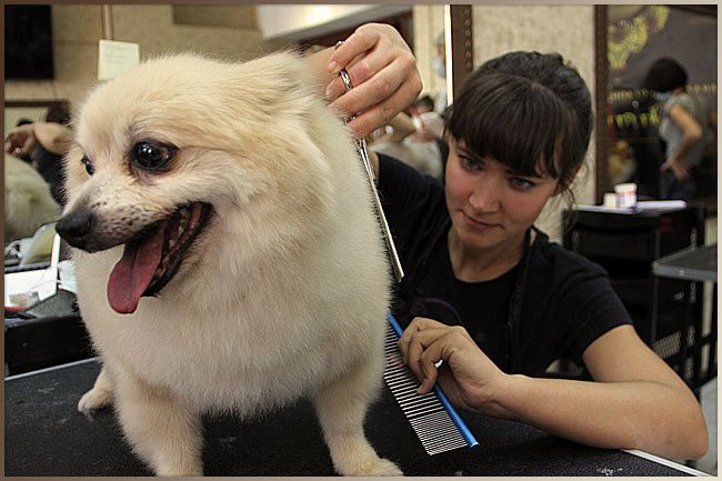 обучение стрижке собак