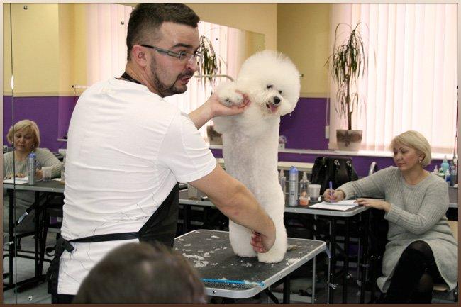 Преподаватель показывает, как правильно держать собаку во время стрижки
